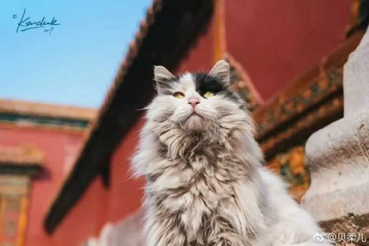 周到上海 生活 乐活 正文  如今住在故宫里的猫咪,有的是当年御猫的