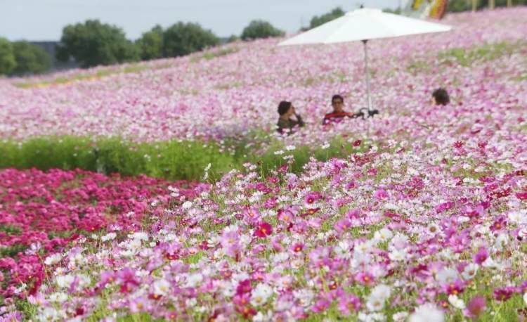 五厍农业休闲观光园图片